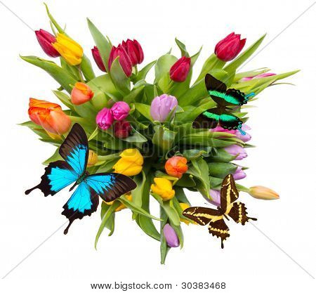 Bouquet of tulips with butterflies, isolated on white background poster