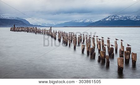 Old Deck In Puerto Natales, Chile. Seagulls Resting On The Deck In South Patagonia. Black And White