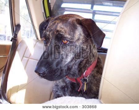 Sad Dog. Time To Go Home.