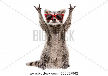 Funny Raccoon In Red Glasses Showing A Rock Gesture Isolated On White Background