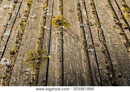 Boards Covered With Moss. Picturesque Old Wooden Surface. Texture Of Old Boards.