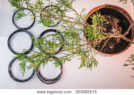 Structure Of Bonsai Will Be Successfully Through The Process Of Caring For So Many Countless Times,