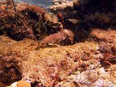 scuba reef fish coral turtle sea snake lobster puffer exploring water underwater diving poster