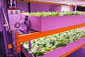 Electronics controling aquaponics system that combines fish aquaculture with hydroponics, cultivating plants in water under artificial lighting poster