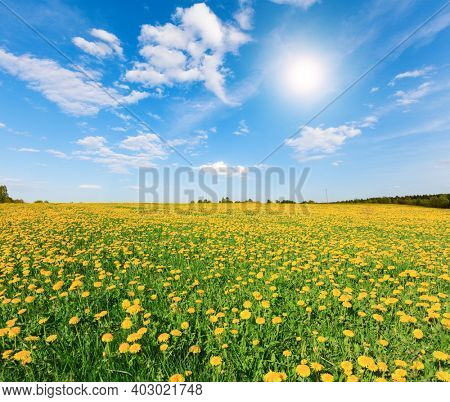 Yellow flowers hill under blue cloudy sky with sun