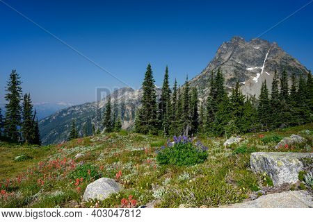 Alpine Meadow In North Cascades National Park Along Maple Pass