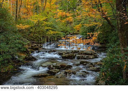 Branch Of Orange Leaves Over Rhododendron Lined Creek In Great Smoky Mountains National Park