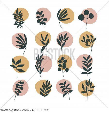 Abstract Trendy Botanical Vector Illustration Set. Art Modern Print, Boho Home Decor Poster. Stories