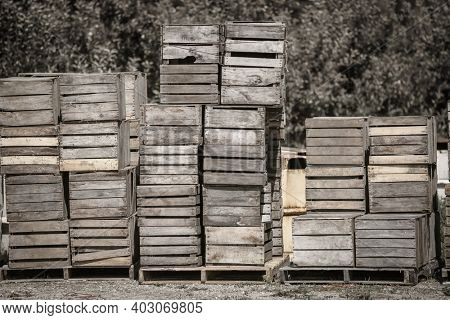 Old shipping crates of produce and fruits at the farm