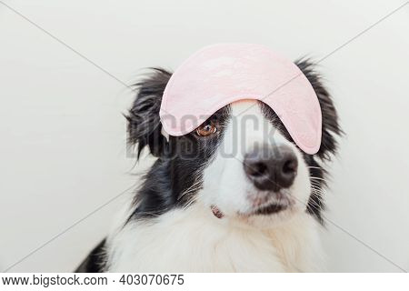 Do Not Disturb Me, Let Me Sleep. Funny Cute Smiling Puppy Dog Border Collie With Sleeping Eye Mask I