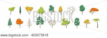 Collection Of Deciduous And Evergreen Forest Plants Isolated On White Background. Botanical Collecti