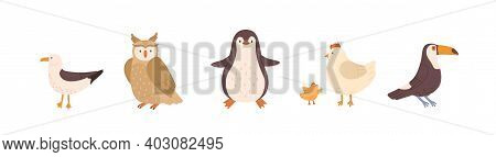 Set Of Front And Side Views Of Cute Birds. Gull, Owl, Penguin, Chicken, Hen And Toucan Isolated On W