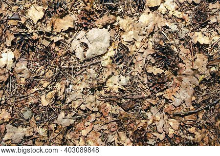 Autumn Forest Ground Background. Golden Yellow Leaves On The Ground. Fall Season Path In A Park Text