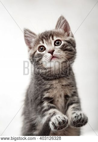 Beautiful Playful Baby Cat With Paws On White Background. Pet Animal. Kitten Pads View From Below. T
