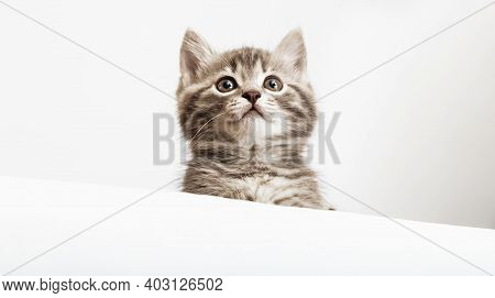 Pet Kitten Curiously Peeking Behind White Background. Tabby Baby Cat Showing Placard Template. Kitte