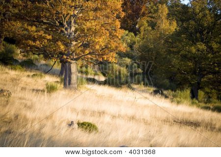 Autumnal Scene In The Forest