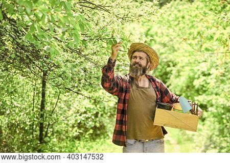 Organic Farm. Gardener Hold Box With Gardening Tool. Gardening Advice. Gardening Tips. Garden Care.