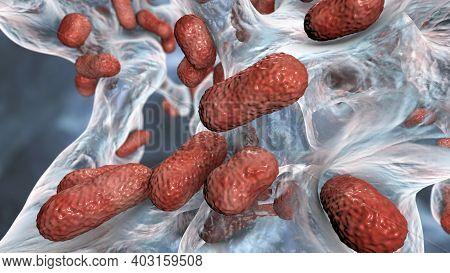 Multidrug Resistant Bacteria. Biofilm Of Bacteria Acinetobacter Baumannii, The Common Causative Agen