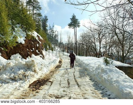 Person Walk On Snow In Kashmir Covered Hills Mountains Plants Valley.