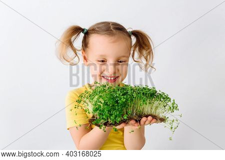 Raw Microgreens Broccoli Sprouts In Child Hands, Healthy Eating Concept. The Child Enjoys Fresh Gree