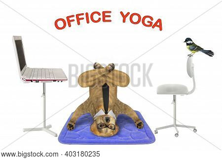 A Dog Is Doing Yoga Exercises On A Blue Fitness Mat Near A Laptop. Office  Yoga. White Background. I