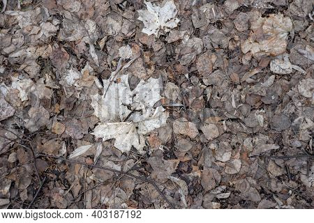 Background Of Rotten Gray Autumn Leaves In Early Spring