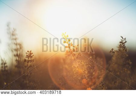 Defocused View Of Dried Wild Flowers And Grass In A Meadow In Winter Or Spring оr Fall In The Bright