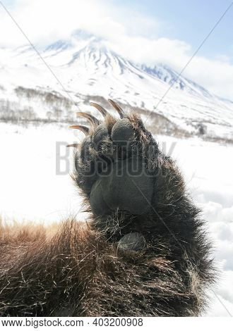 Paw Of A Large Bear With Long Claws On The Background Of A Snow-covered Mountain. The Front Left Paw