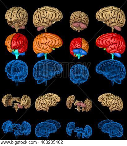 100 Megapixels Set - Human Brain With X-ray Examination Style Image And Colored Zones Isolated, Phys