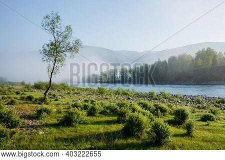 Wonderful Calm Morning Landscape With Alone Tree Near Mountain River In Fog. Beautiful Green Meadow