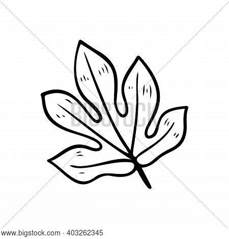 Silhouette Of Aralia Leaves. Tropical Plant Floral Doodle Element. Outline Aralia Hawaiian Leaf. Han