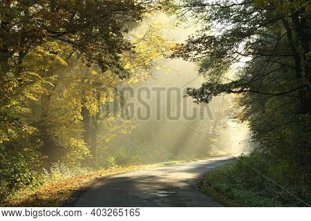 Road path autumn forest Nature landscape Nature trees sunrise Nature background landscape Nature background woods Nature landscape Nature background landscape Nature landscape Nature background landscape Nature background Nature landscape Nature landscape