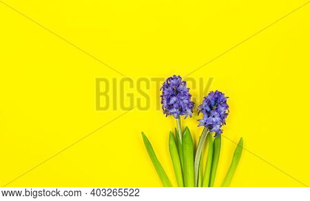 Two Blue Flowers On Spring Or Summer Yellow Background With Copy Space.