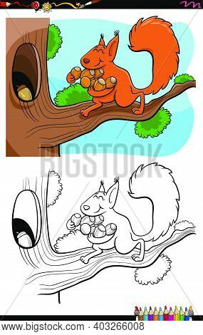 Cartoon Illustration Of Squirrel Carrying Acorns To The Hollow Coloring Book Page