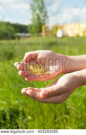 Spreading Grass Seed In Spring By Hand For The Perfect Lawn. Sowing Grass Seed By Hand. Grass Seeds