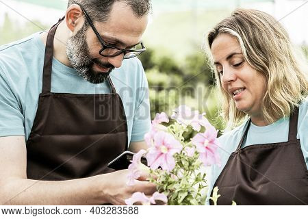 Professional Gardeners Growing Plants And Shooting Them On Phone. Caucasian Serious Grey-haired Man