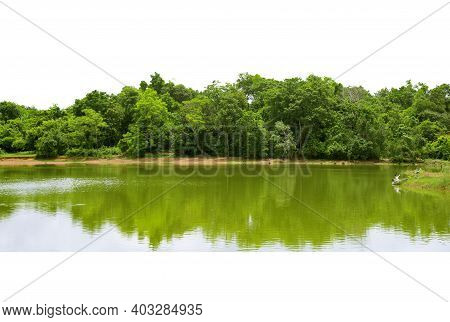 View Of A High Definition Treeline,  Forest And Foliage In Summer,  Green Trees,  Isolated On A Whit