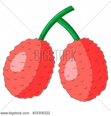 Drawn Two Asian Fruit Lychee In Color