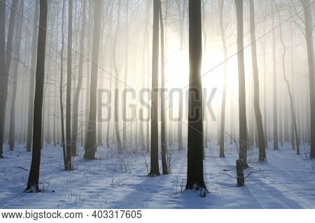 Winter wood forest sunrise landscape Nature sun landscape Nature background Nature landscape snow Nature frost Nature background Nature landscape Nature landscape Nature background tree Nature background light Nature landscape Nature landscape background.