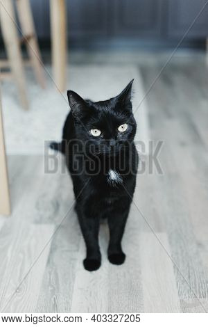 Cat in The House - A black cat On The Floor With Kitchen In The Background. Cozy Home And Hygge Tren