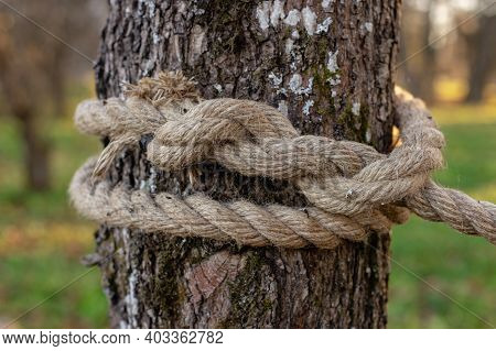 An Old Rope Tied In A Knot To A Large Tree In The Forest. A Rope Around The Trunk Of A Tree, A Rope