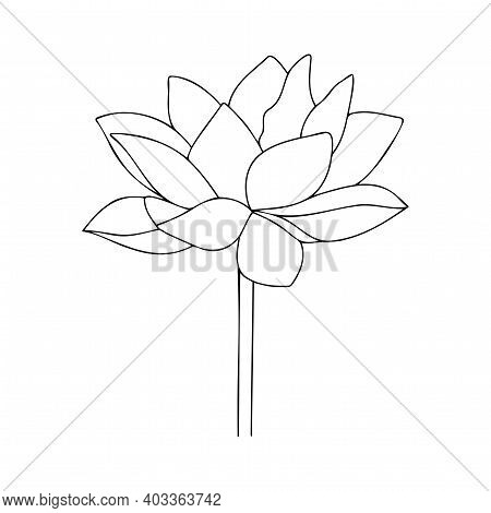 Vector Lotus Silhouette. Water Lily Asian Flower. Blossom Flower Illustration. Floral Illustration.