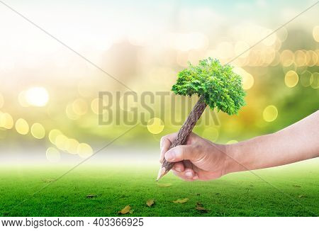 Teacher Day Concept: Student Hand Holding Pencil Of Tree And Writing On Green Meadow Over Blurred Fo