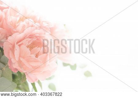 Bouquet Of Peonies On A White Background. Eucalyptus And Peonies Bouquet In A Glass Vase. Beautiful
