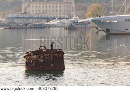 Raid Barrel In The Bay. A Large Metal Barrel For Mooring The Ship.