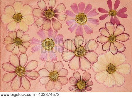 Page From An Old Photo Album. Flowers Cosmos, Kosmeya. Scrapbooking Element Decorated With Leaves, F