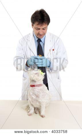 Vet holding a bottle of prescription pills ready to treat a pet dog poster