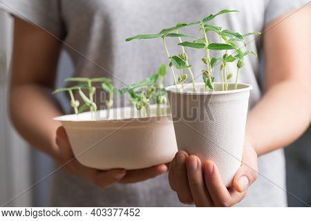 Organic Plant Growing In Recycling Biodegradable Coffee Cup And Bowl Holding By Woman Hand, Eco Frie