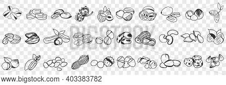 Various Edible Nut Doodle Set. Collection Of Hand Drawn Hazel, Almond, Pistachio, Peanuts, Cashew Nu