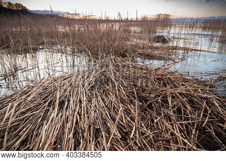 Shore Water And Pile Dry Coastal Reed, Coastal Landscape. Gulf Of Finland, Russia